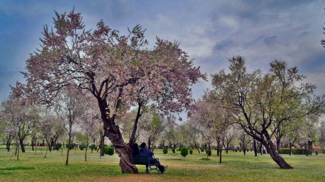 سری نگر میں موسمِ بہار