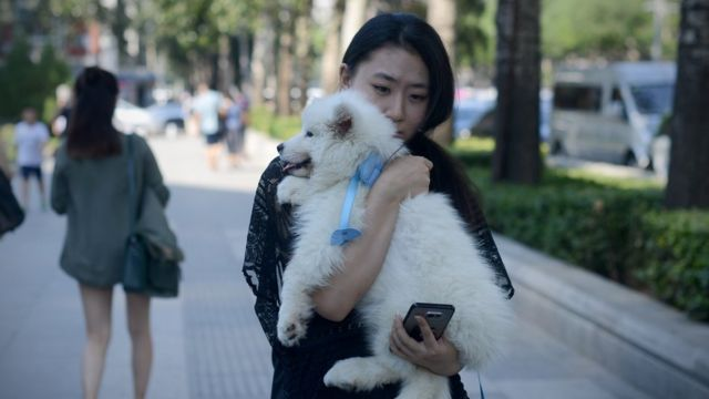 How a dog made Chinese netizens share the pain of rejection