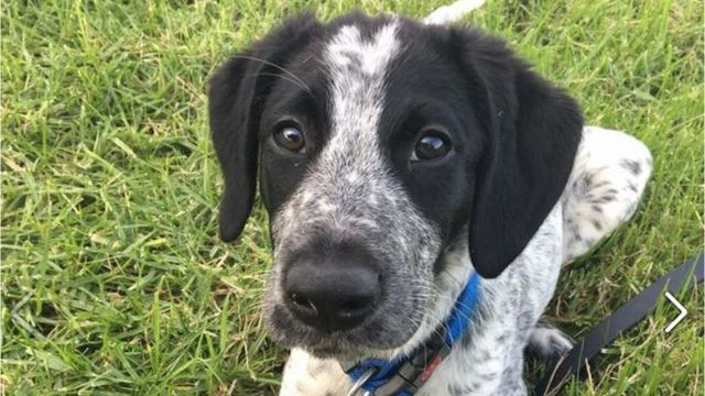 Runaway New Zealand sniffer dog shot at Auckland airport
