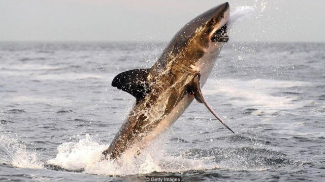 Las verdaderas razones por las que los tiburones atacan a