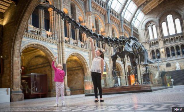 """แบบจำลองโครงกระดูกไดโนเสาร์ """"ดิปปี้"""" (Dippy) ตั้งแสดงในพิพิธภัณฑ์ประวัติศาสตร์ธรรมชาติกรุงลอนดอน"""