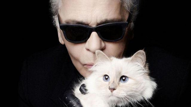 القطة المليونيرة !