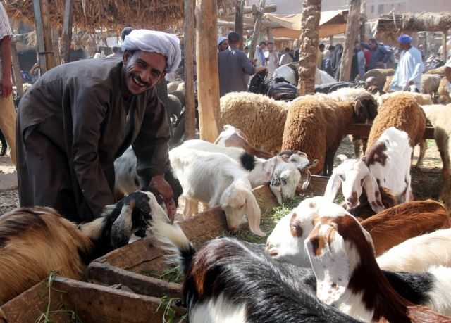 An Egyptian man holds a sheep ahead of the Eid al-Adha at a local market