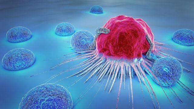 Linfocitos atacando una célula cancerígena