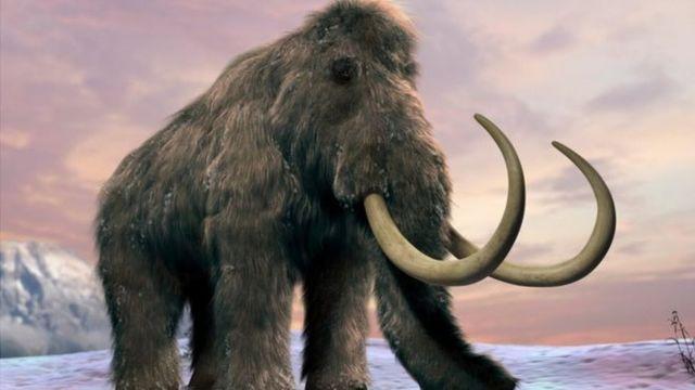 mommoth, china, tusk