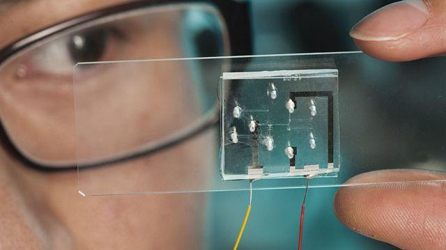 Investigador mirando C. elegans atrapados individualmente en una placa
