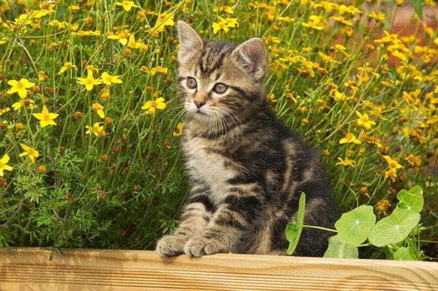 Котенок в саду