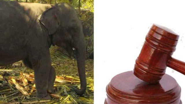 Baby Elephant court case
