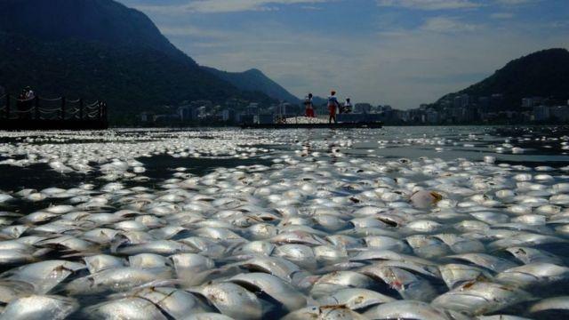 ölü balıklar.