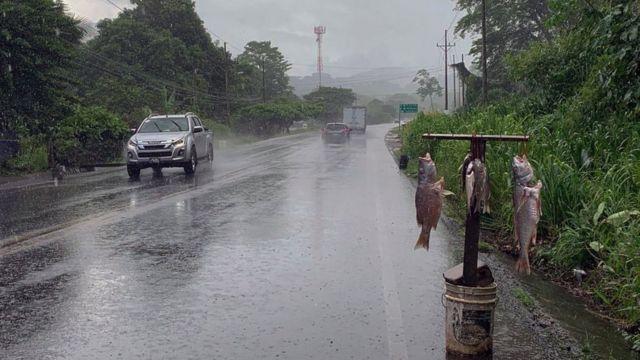 Venta de pescado en la carretera