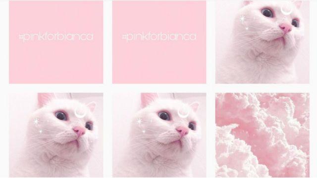 Fotos de gatos #pinkforbianca