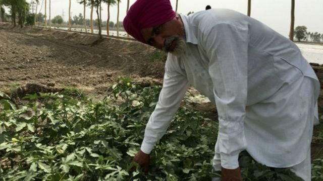पंजाब के खेत में किसान