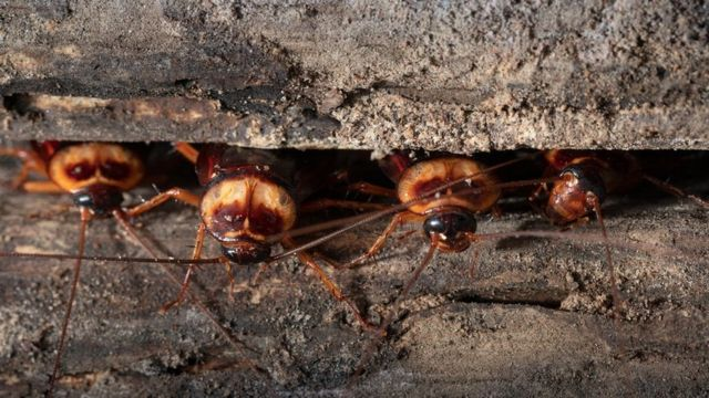 (캡션) 바퀴벌레와 파리는 점점 더 늘 전망이다