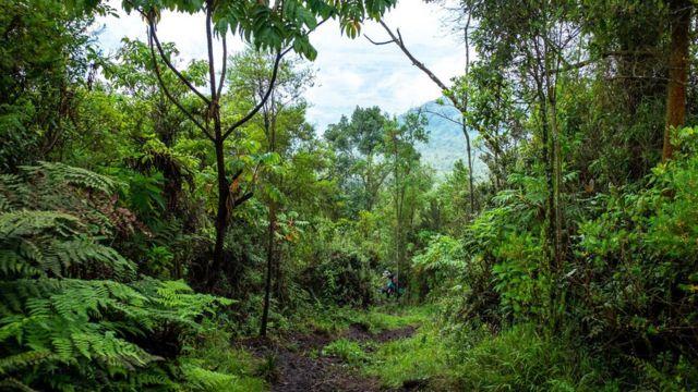 Le Nyiragongo se trouve juste à l'intérieur du parc national des Virunga.
