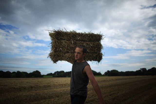 Сезонный работник на английской ферме