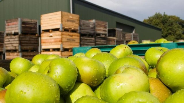 صناديق تفاح