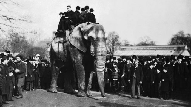 Jumbo carrega oito pessoas sobre seu lombo no zoológico de Londres
