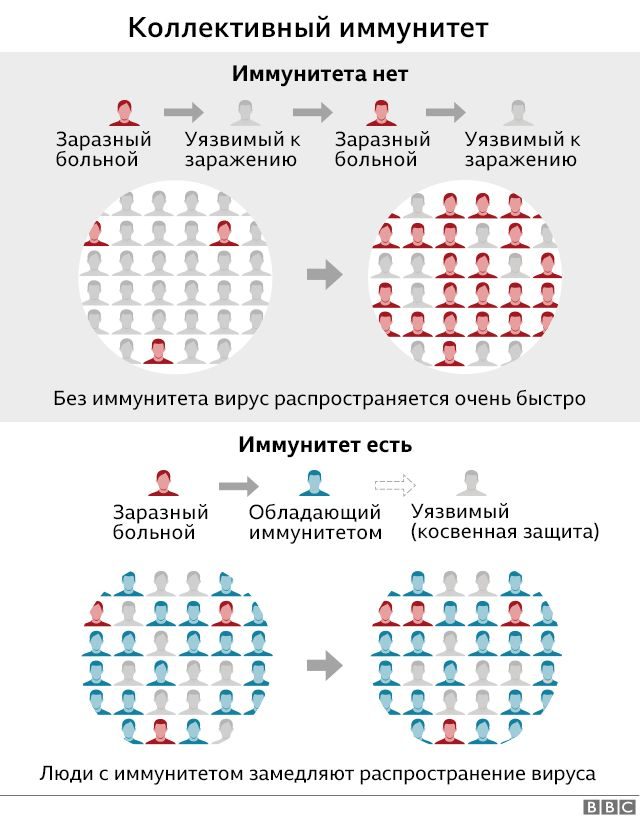Схема действия коллективного иммунитета