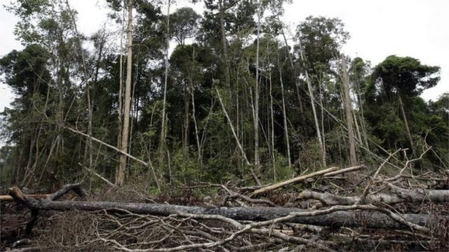Farming and forestry can deliver food security, says UN