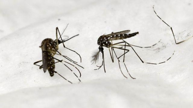 Les échantillons d'haleine des personnes atteintes de paludisme dégagent une odeur particulière qui permet de détecter la maladie.