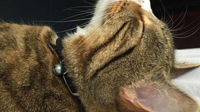 Кіт Арчі фотографа Мар'ян Дебевер муркоче дуже часто
