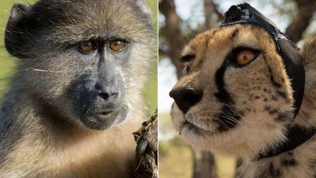 """""""Животные с камерами"""" раскрывают секреты дикой природы"""