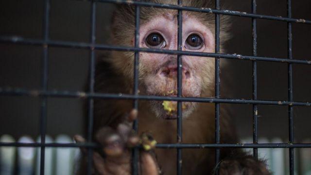 Mono en una jaula.