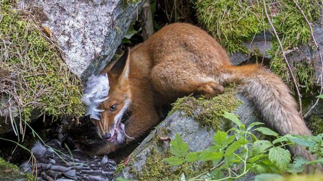 Foto del zorro