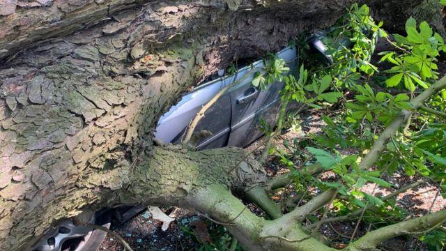 Man hurt as huge tree falls on car at Manea play park