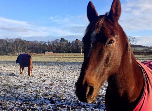 馬は主に左目を使って怒った人間の表情を見ている