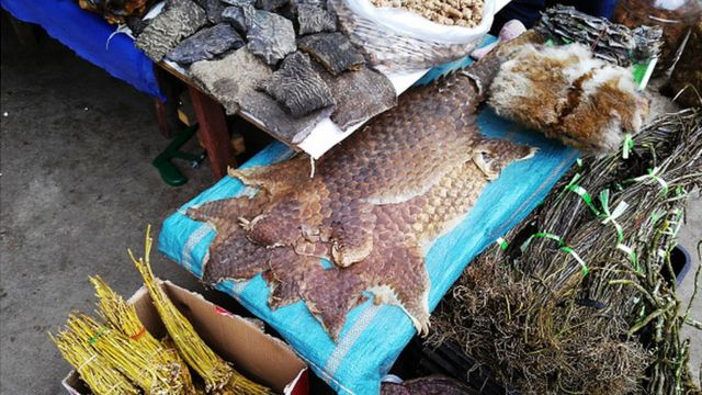 La peau de pangolin en vente dans un marché de Birmanie