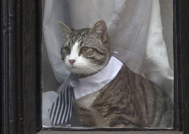 Assange'ın kedisi