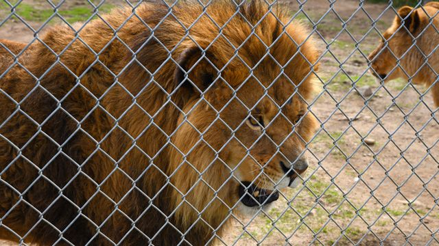 Canada zoo owner charged with animal cruelty