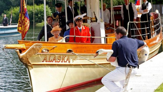 Nữ hoàng Elizabeth II trong một lần đi thuyền thăm thiên nga của bà ở gần Windsor