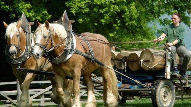 يتمتع الحصان بقوة تحمل هائلة
