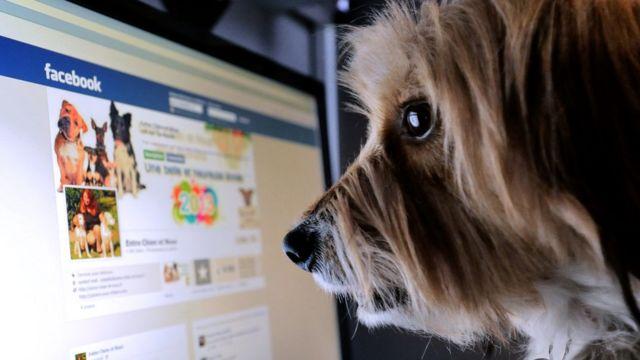 Facebook ekranına bakan köpek