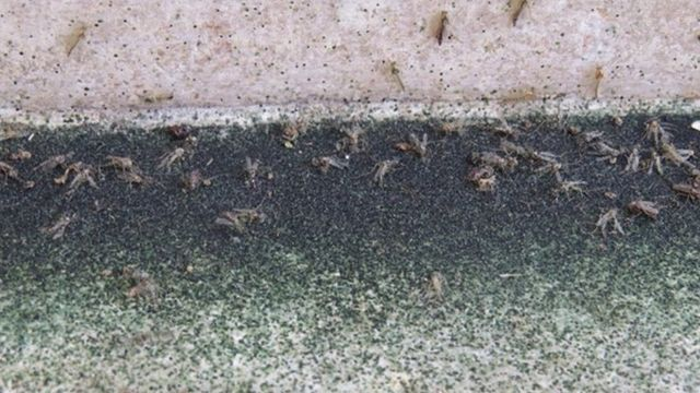 Bugs invading the Taj Mahal