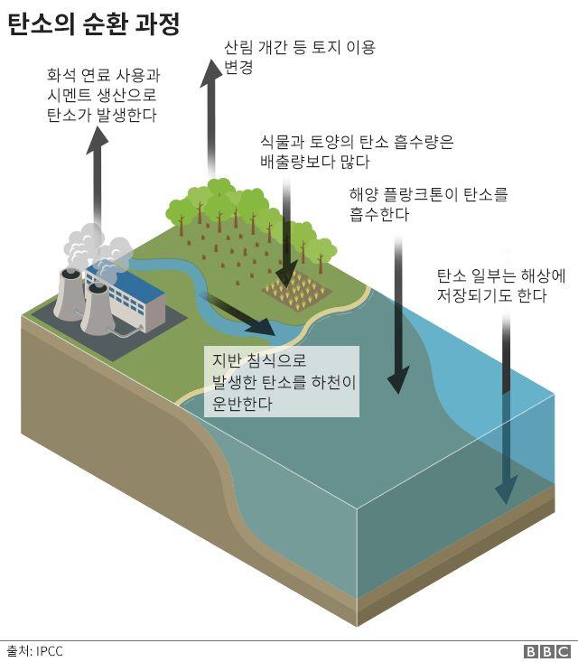 탄소의 순환 과정