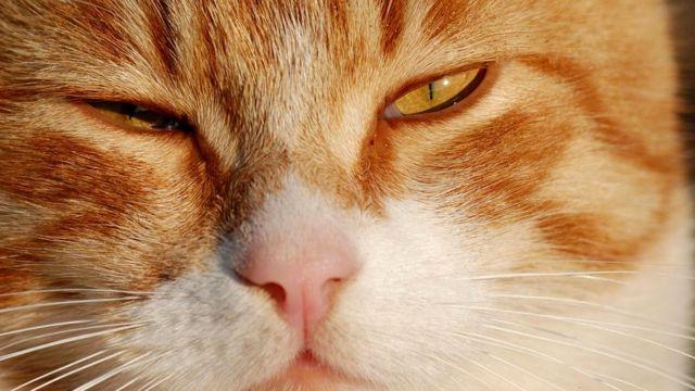 Медленно мигающая, жмурящаяся кошка выражает таким образом любовь к вам
