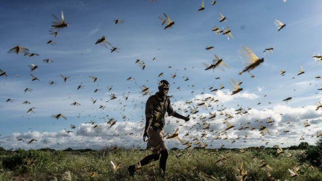 Un hombre en el Condado de Samburu, Kenia, en medio de un enjambre de langostas del desierto. 21 de mayo de 2020.
