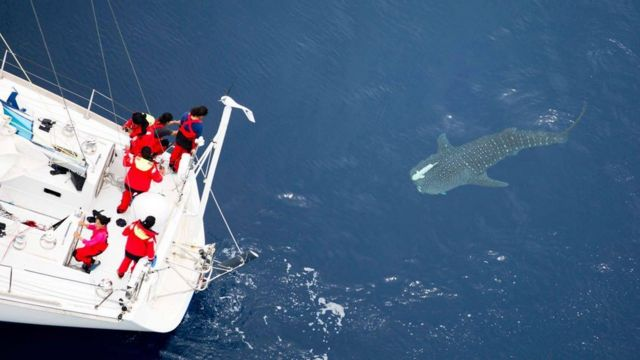 tARINI TEAM AND WHALE SHARK