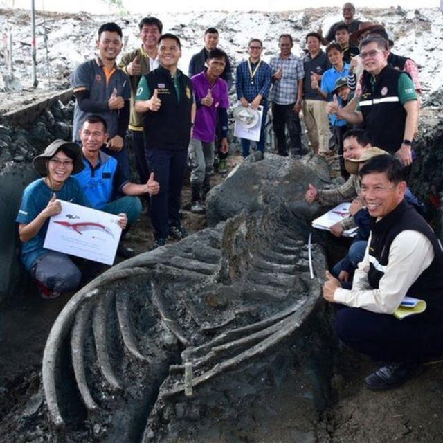 Hallan en Tailandia el esqueleto casi intacto de una ballena de hace al  menos 3.000 años - BBC News Mundo