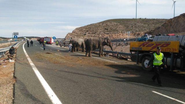 Los elefantes sobre la carretera A-30 de España