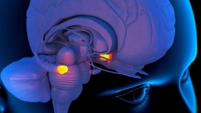 اللوزة الدماغية في المخ