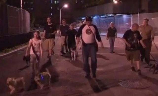 강아지와 함께 쥐잡기에 나선 뉴욕 시민들