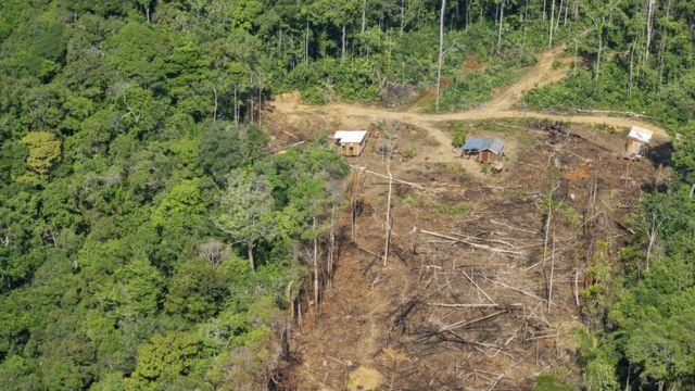 Deforestación en la selva amazónica.