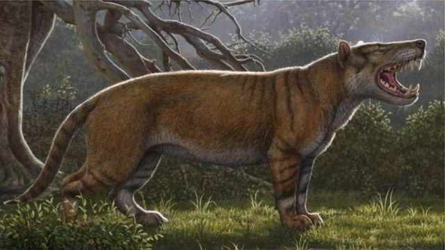 """Dis na """"Simbakubwa kutokaadfrika"""" meaning """"big Africa lion2 for Swahili."""