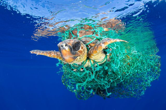 A sea turtle entangled in a fishing net swims off the coast of Tenerife, Canary Islands, Spain, on 8 June 2016.