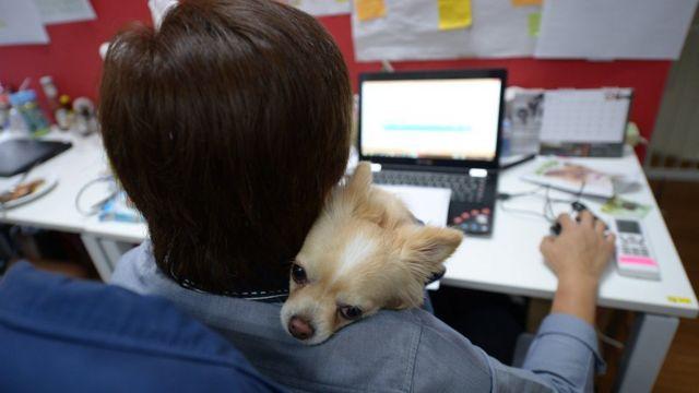 สุนัขเกาะไหล่พนักงานที่กำลังนั่งทำงานหน้าคอมพิวเตอร์