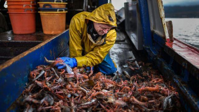 Pescador escocés con crustáceos.